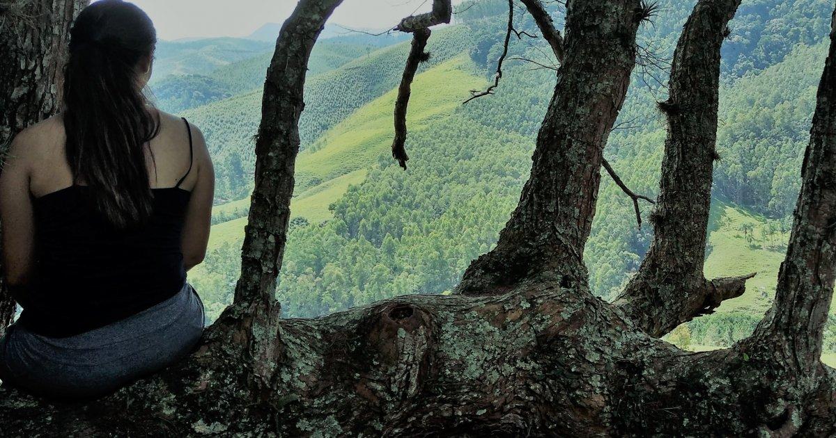 tree 1200x630 - Quando o universo conspira: uma história para inspirar!