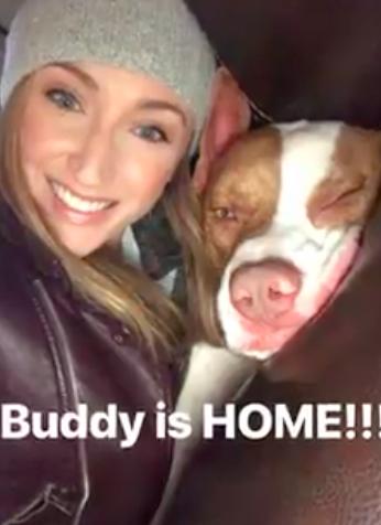 """pit bull invade carrinha e acaba sendo adoptado3 - Pit Bull """"invade"""" carrinha e acaba sendo adoptado"""