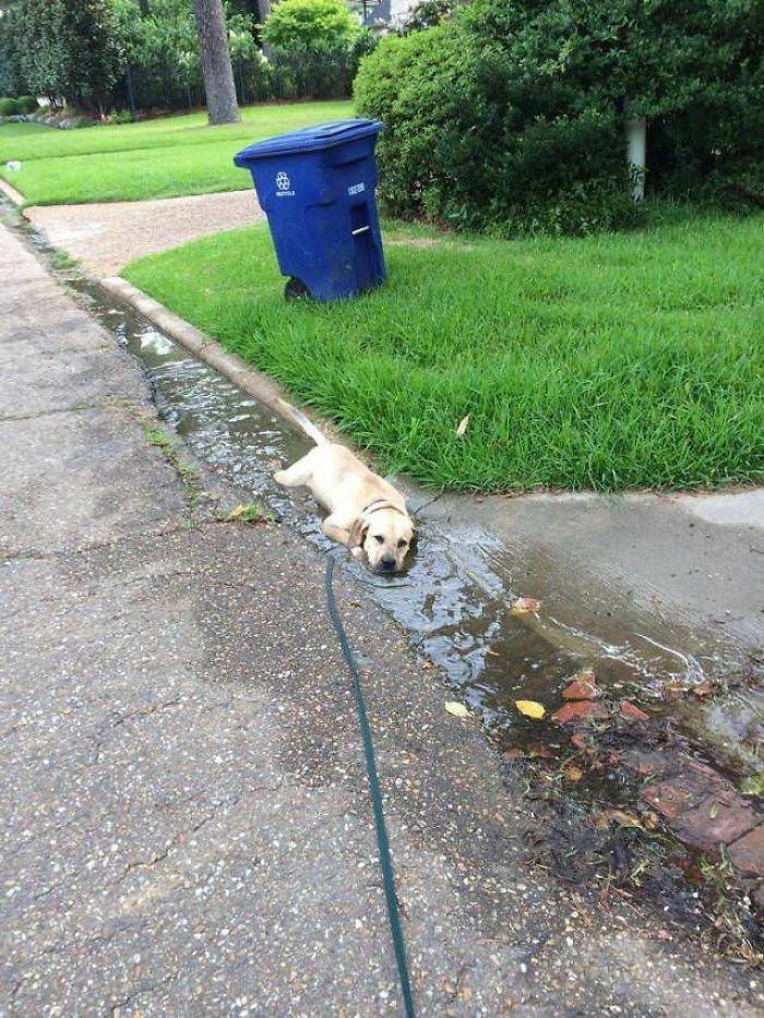 13 fotos que provam que os golden retrievers sao dos melhores cachorros de sempre1 - 13 fotos que provam que os Golden Retrievers são dos melhores cachorros de sempre