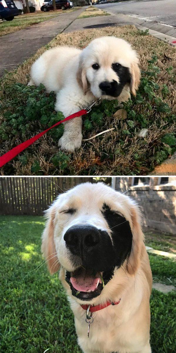13 fotos que provam que os golden retrievers sao dos melhores cachorros de sempre11 scaled - 13 fotos que provam que os Golden Retrievers são dos melhores cachorros de sempre