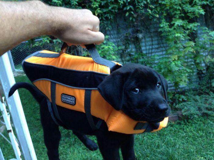 13 fotos que provam que os golden retrievers sao dos melhores cachorros de sempre13 - 13 fotos que provam que os Golden Retrievers são dos melhores cachorros de sempre