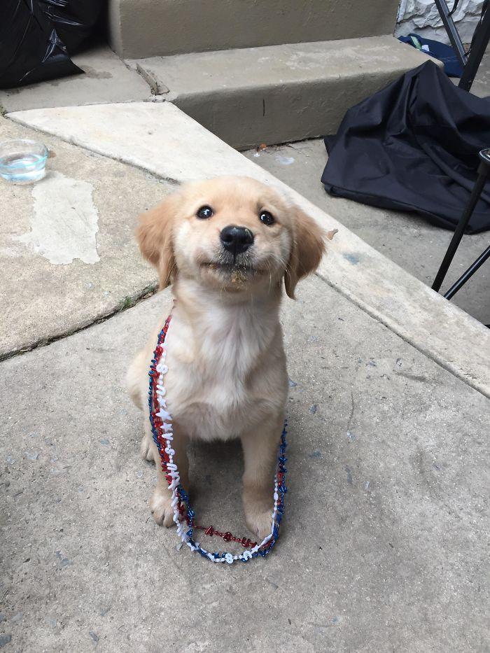 13 fotos que provam que os golden retrievers sao dos melhores cachorros de sempre5 - 13 fotos que provam que os Golden Retrievers são dos melhores cachorros de sempre