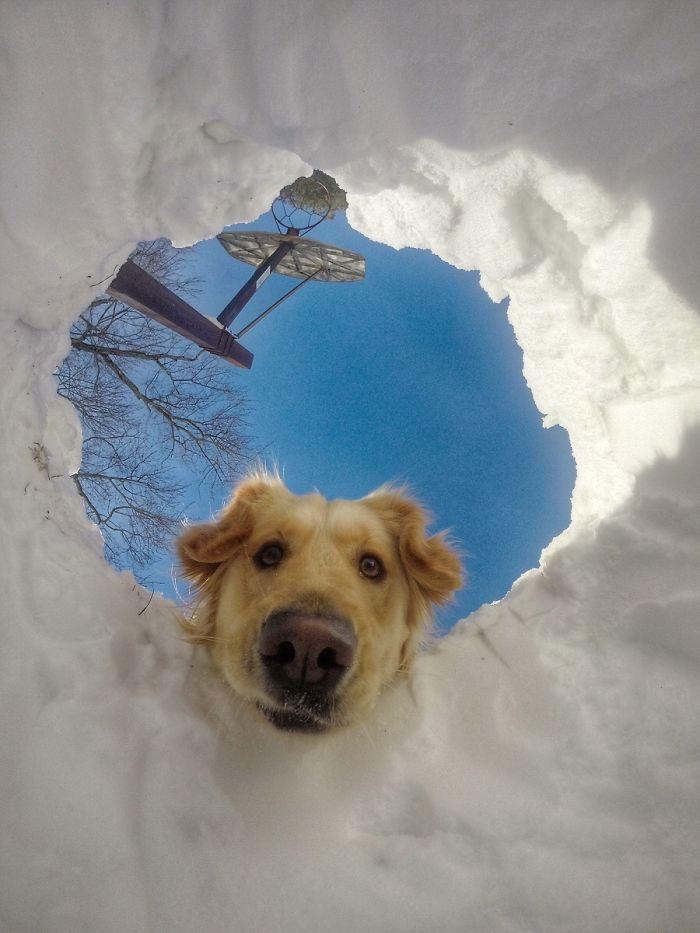 13 fotos que provam que os golden retrievers sao dos melhores cachorros de sempre8 - 13 fotos que provam que os Golden Retrievers são dos melhores cachorros de sempre