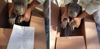 menino deixa cachorro em abrigo para o proteger do pai 324x160 - Início