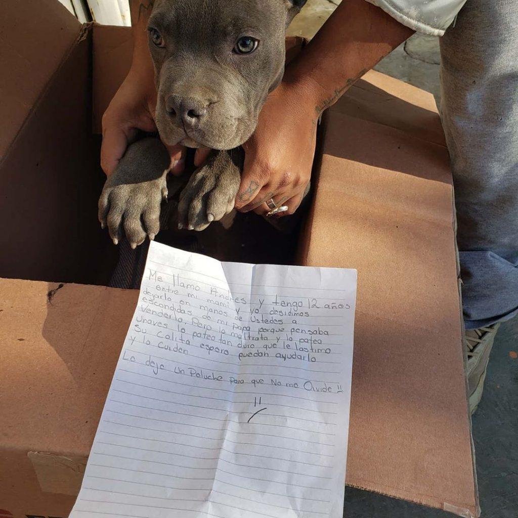 menino deixa cachorro em abrigo para o proteger do pai1 1024x1024 - Menino deixa cachorro em abrigo para o proteger do pai