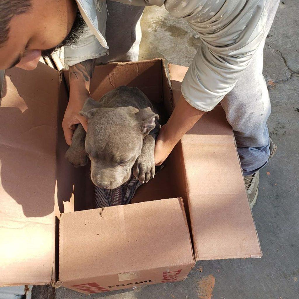 menino deixa cachorro em abrigo para o proteger do pai2 1024x1024 - Menino deixa cachorro em abrigo para o proteger do pai