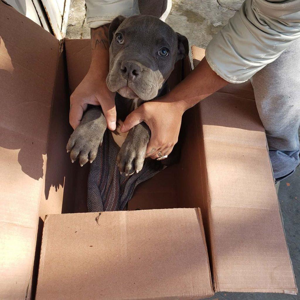 menino deixa cachorro em abrigo para o proteger do pai3 1024x1024 - Menino deixa cachorro em abrigo para o proteger do pai