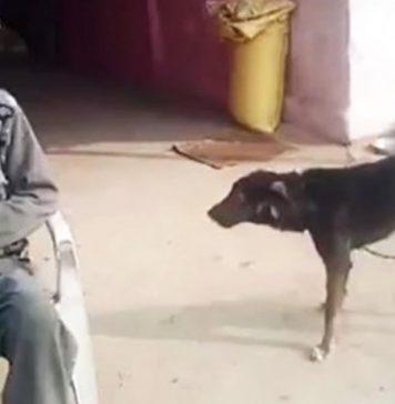 desapontado-com-os-filhos-ele-deu-metade-de-sua-propriedade-para-seu-cachorro