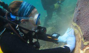 1 1 300x178 - ÓTIMA NOTÍCIA: Antibiótico humano pode curar doenças em Corais em até 95%