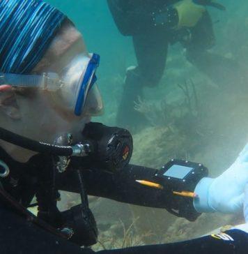 otima-noticia-antibiotico-humano-pode-curar-doencas-de-coral-em-ate-95